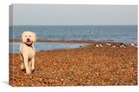 Dog at beach, Canvas Print