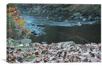 Frosty Leaves, River Ardle, Canvas Print
