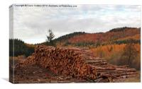 Tree felling in Perthshire, Canvas Print