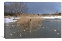 Snowy Lake, Canvas Print