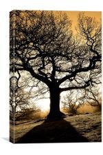 Spooky tree, Canvas Print
