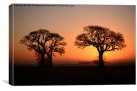 Trees at sunrise, Canvas Print