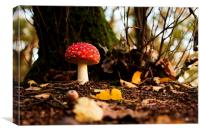 Fly agaric during sunset, Canvas Print
