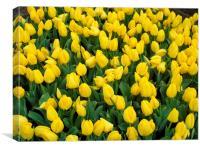 Sunshine tulips, Canvas Print