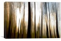 Forest Abstract, Canvas Print