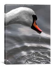 Swans Head, Canvas Print