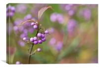 Japanese Beautyberry, Canvas Print