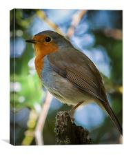 On guard Robin style, Canvas Print