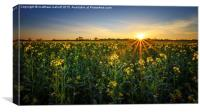 Balmy April Countryside Sunset, Canvas Print