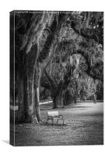 A quiet bench under the oak tree - black and white, Canvas Print