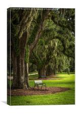 A quiet bench under the oak tree - color, Canvas Print