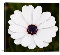White flower, Canvas Print