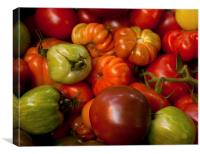 A mixture of tomatoes, Canvas Print
