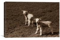 Twin Spring Lambs, Canvas Print