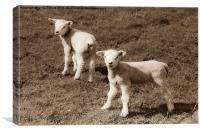 Newborn twin lambs in Sepia, Canvas Print