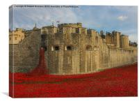 The Poppies at the Tower of London, Canvas Print