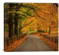 Autumn at Mote Park , Canvas Print