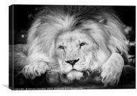 The King Of The Jungle, Canvas Print