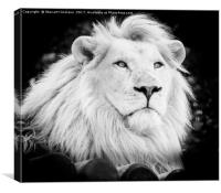 Majestic White Lion, Canvas Print