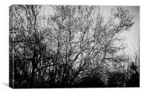 Dark Tree, Canvas Print
