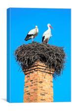 Storks, Canvas Print