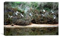 Flying Ducks, Canvas Print