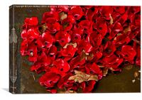 Tower Poppies, Canvas Print