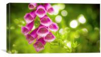 Foxgloves in the Summer Sun, Canvas Print