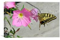 Butterfly and Flowers, Canvas Print