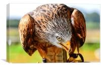 bird of prey red kite, Canvas Print
