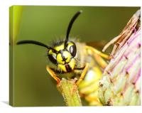 wasp face, Canvas Print