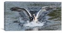 beautiful swan, Canvas Print