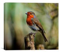 robin redbreast, Canvas Print
