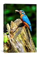 kingfisher, Canvas Print