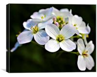White Flowers, Canvas Print
