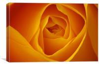 Yellow Rose Macro, Canvas Print