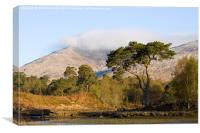 Scots Pine At Loch Tulla, Canvas Print