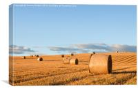 Haybales in the Early Evening Sunlight., Canvas Print