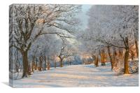 Winter tree scene., Canvas Print