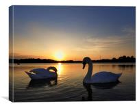 Two Swans at Sunset, Canvas Print
