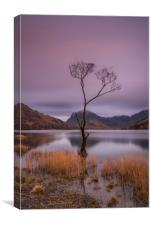 Buttermere Tree, Canvas Print