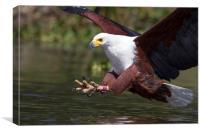 Africa Fish Eagle, Canvas Print