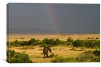Masai Mara Rainbow, Canvas Print