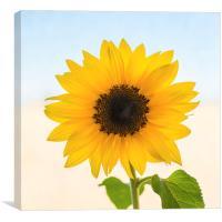 Yellow Sunflower, Canvas Print