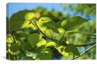 Summer Sun Shining on Leaves, Canvas Print