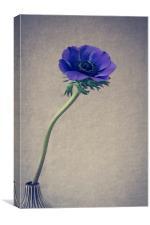 Blue Anemone Still Life, Canvas Print