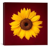 Sunflower on a Red Background, Canvas Print