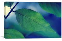 Green Leaf on Blue, Canvas Print