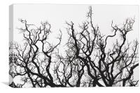 Branch Out, Canvas Print