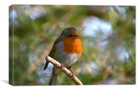 Robin on branch, Canvas Print